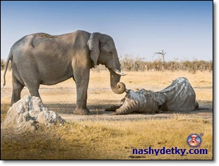 slonyi