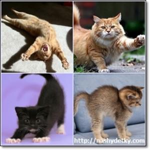 кошки потягиваются